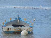 barca ed airone bianco - 19 febbraio 2012  - Nubia (444 clic)