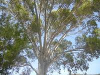 albero - Bosco di Scorace - Il Contadino - 13 maggio 2012  - Buseto palizzolo (404 clic)