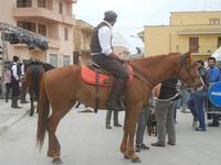 SPERONE - sfilata di cavalli - festa San Giuseppe Lavoratore - 29 aprile 2012  - Custonaci (467 clic)