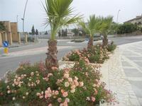 Piazzale della Autonomia Siciliana - aiuole fiorite - 20 maggio 2012  - Poggioreale (795 clic)
