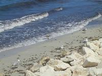 Lungomare Dante Alighieri - gabbiani in riva al mare - 16 luglio 2012  - Trapani (327 clic)