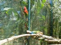 BIOPARCO di Sicilia - Zoo - 17 luglio 2012  - Villagrazia di carini (342 clic)