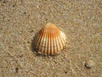 conchiglia  - 10 settembre 2012  - Alcamo marina (257 clic)