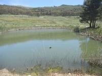 anatra nel laghetto - Bosco di Scorace - Il Contadino - 13 maggio 2012  - Buseto palizzolo (339 clic)