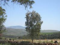 panorama bosco, colline e monti - Bosco di Scorace - 13 maggio 2012  - Buseto palizzolo (343 clic)