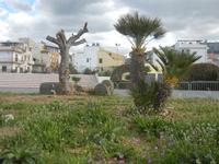 giardino pubblico - 15 aprile 2012  - Terrasini (893 clic)