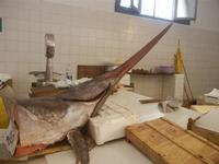 pescheria - pesce spada - 16 luglio 2012  - Trapani (712 clic)
