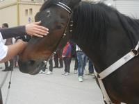 SPERONE - sfilata di cavalli - festa San Giuseppe Lavoratore - 29 aprile 2012  - Custonaci (446 clic)
