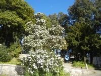 Giardini del Balio - 1 aprile 2012  - Erice (615 clic)