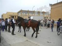 SPERONE - sfilata di cavalli - festa San Giuseppe Lavoratore - 29 aprile 2012  - Custonaci (427 clic)