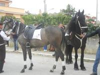 SPERONE - sfilata di cavalli - festa San Giuseppe Lavoratore - 29 aprile 2012  - Custonaci (410 clic)
