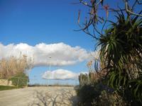 accesso all'Imbarcadero per l'Isola di Mozia - aloe, canneto e nuvole- 19 febbraio 2012  - Marsala (452 clic)