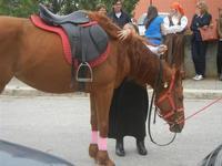 SPERONE - sfilata di cavalli - festa San Giuseppe Lavoratore - 29 aprile 2012  - Custonaci (493 clic)
