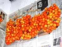 pomodori ciliegini appesi - Bosco di Scorace - Il Contadino - 13 maggio 2012  - Buseto palizzolo (545 clic)