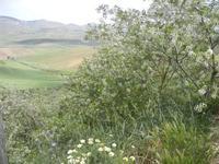 SIRIGNANO - Agriturismo - panorama agreste - 1 maggio 2012  - Monreale (769 clic)