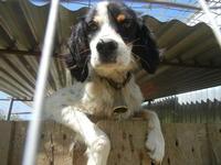 cane con campanella - Baglio Arcudaci - 1 aprile 2012  - Bruca (1366 clic)