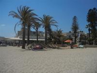 palme sulla spiaggia - 18 agosto 2012  - San vito lo capo (234 clic)