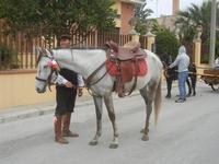 SPERONE - sfilata di cavalli - festa San Giuseppe Lavoratore - 29 aprile 2012  - Custonaci (569 clic)