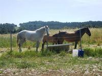 cavalli e puledro - Bosco di Scorace - Il Contadino - 13 maggio 2012  - Buseto palizzolo (373 clic)