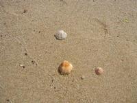 conchiglie - 10 settembre 2012  - Alcamo marina (276 clic)