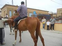 SPERONE - sfilata di cavalli - festa San Giuseppe Lavoratore - 29 aprile 2012  - Custonaci (488 clic)