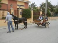 SPERONE - sfilata di cavalli - festa San Giuseppe Lavoratore - 29 aprile 2012  - Custonaci (452 clic)