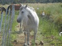 cavalli - Bosco di Scorace - Il Contadino - 13 maggio 2012  - Buseto palizzolo (350 clic)