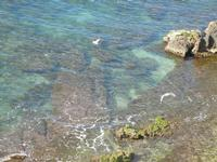 gabbiani in volo sul mare - Cala Petrolo - 5 marzo 2012  - Castellammare del golfo (445 clic)