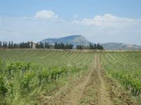 SIRIGNANO - Agriturismo - vigneti e panorama fino al Monte Bonifato - 1 maggio 2012  - Monreale (917 clic)
