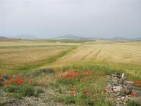 distese di campi e panorama fino al Monte Bonifato - 20 maggio 2012  - Poggioreale (773 clic)