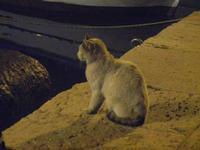 gatto al porto di sera - 31 marzo 2012  - Castellammare del golfo (549 clic)