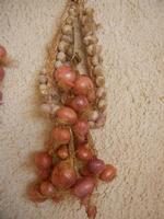 aglio e cipolle - 16 giugno 2012  - Alcamo marina (392 clic)