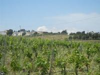 SIRIGNANO - Agriturismo - vigneti e panorama - 1 maggio 2012  - Monreale (555 clic)
