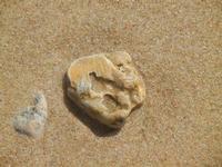 conchiglia fossile - 10 settembre 2012  - Alcamo marina (942 clic)
