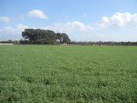 campo verde - 8 aprile 2012  - Nubia (514 clic)