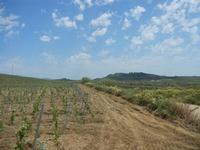 SIRIGNANO - Agriturismo - vigneti e panorama - 1 maggio 2012  - Monreale (482 clic)