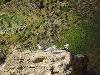gabbiani - Cala Petrolo - 5 marzo 2012  - Castellammare del golfo (387 clic)