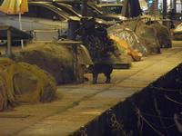gatti al porto di sera - 31 marzo 2012  - Castellammare del golfo (385 clic)