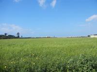 campo di grano - 8 aprile 2012  - Nubia (888 clic)