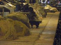gatto al porto di sera - 31 marzo 2012  - Castellammare del golfo (425 clic)