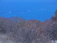 flora e panorama dalla collina ad ovest della città - 23 agosto 2012  - San vito lo capo (395 clic)