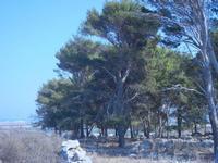 pineta sulla collina ad ovest della città - 23 agosto 2012  - San vito lo capo (467 clic)