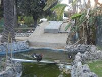 Villa Margherita - oche, anatre e laghetto - nel giardino pubblico - 9 aprile 2012  - Trapani (1002 clic)