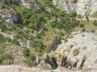 panorama area archeologica - palme nane bruciate da un incendio - 5 agosto 2012  - Segesta (712 clic)