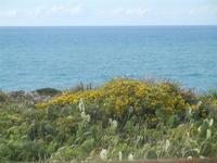 Riserva Naturale Orientata Capo Rama - 15 aprile 2012  - Terrasini (582 clic)