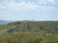 SIRIGNANO - Agriturismo - uliveti e vigneti - 1 maggio 2012  - Monreale (437 clic)