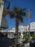 Via Savoia - 18 agosto 2012  - San vito lo capo (304 clic)