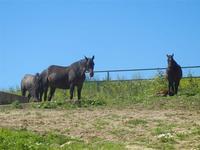 cavalli - Baglio Arcudaci - 9 aprile 2012  - Bruca (1026 clic)
