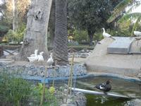 Villa Margherita - oche, anatra e laghetto - nel giardino pubblico - 9 aprile 2012  - Trapani (1074 clic)