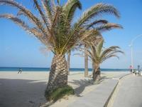 palme in spiaggia - 8 aprile 2012  - San vito lo capo (378 clic)